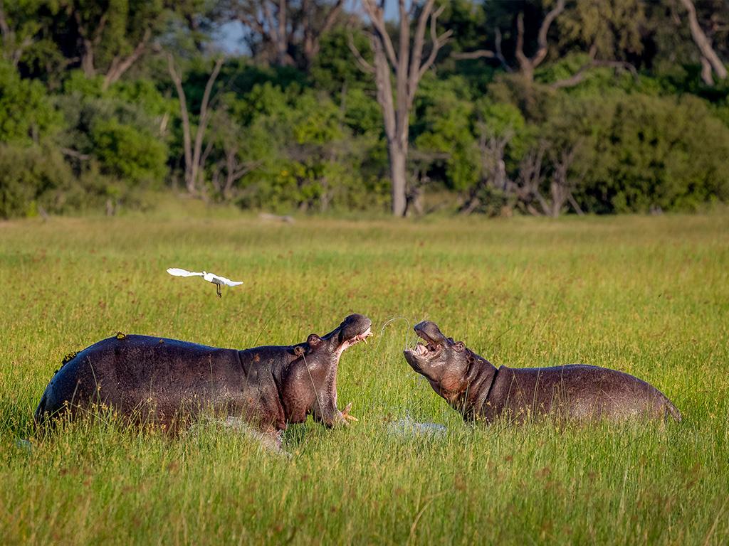 Pangolin Photo Safaris – Charl Stols 02