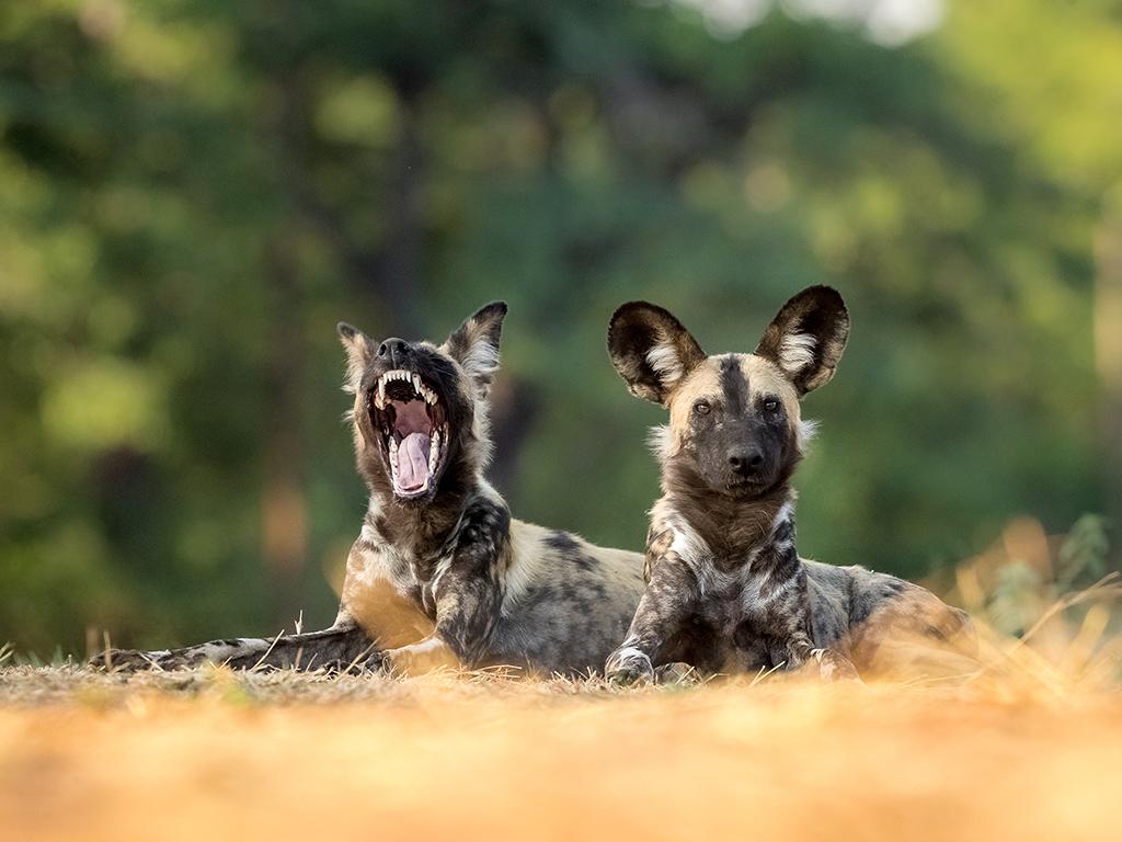 Pangolin Photo Safaris – Charl Stols 04
