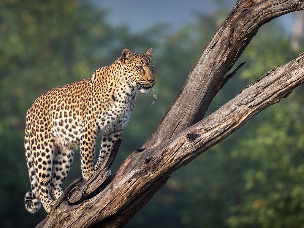 Pangolin Photo Safaris – Charl Stols 08