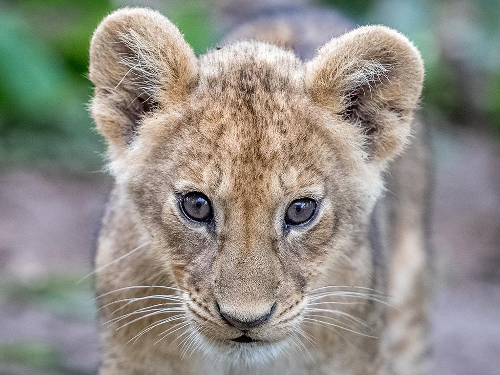 Pangolin Photo Safaris – Charl Stols 11