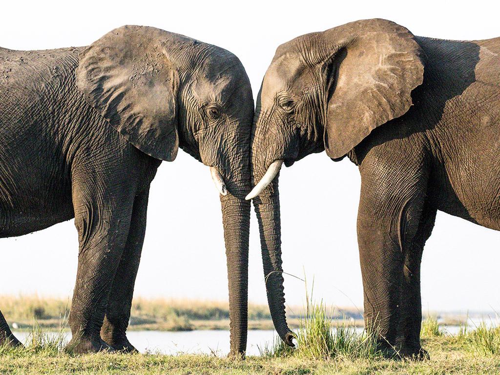 Pangolin Photo Safaris – Charl Stols 19