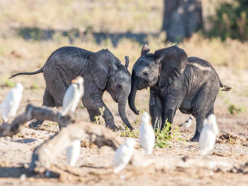 Pangolin Photo Safaris – Charl Stols 20