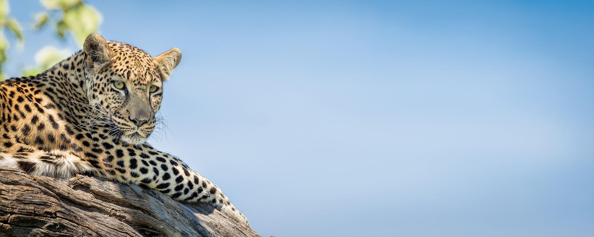 Pangolin Photo Safaris 3