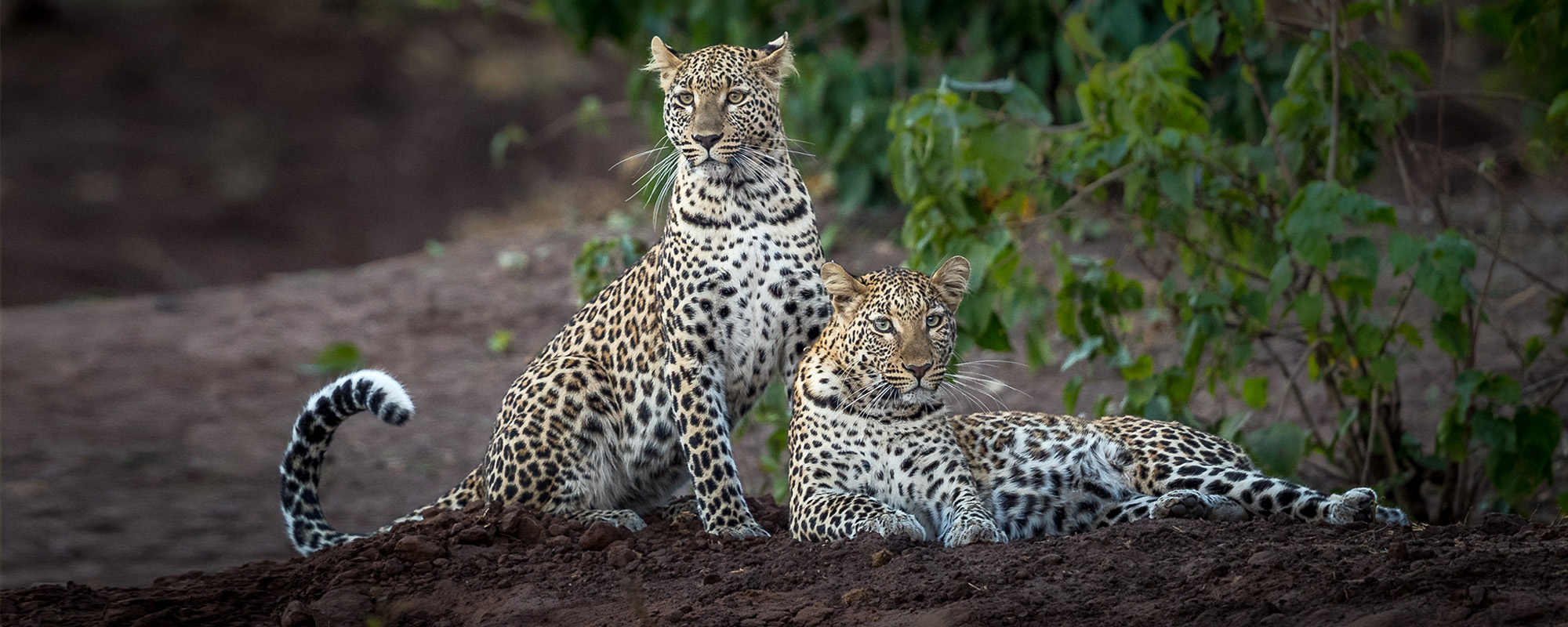 Pangolin Photo Safaris 7
