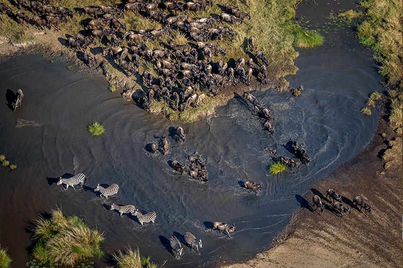 Pangolin Photo Safaris – Masai Mara Add on