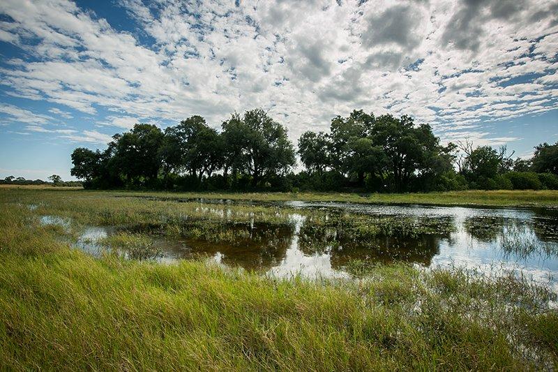 Pangolin Photo Safaris – Okavango Delta Add on