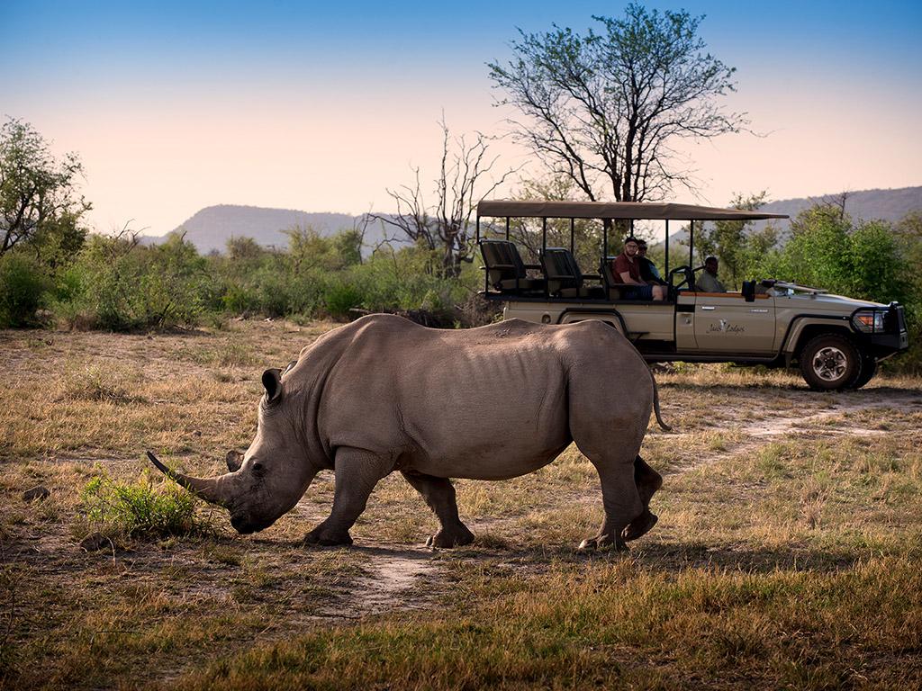 Pangolin Photo Safaris – Partners – Jacis 003