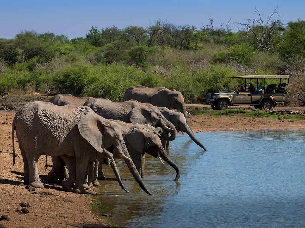 Pangolin Photo Safaris – Partners – Jacis 04