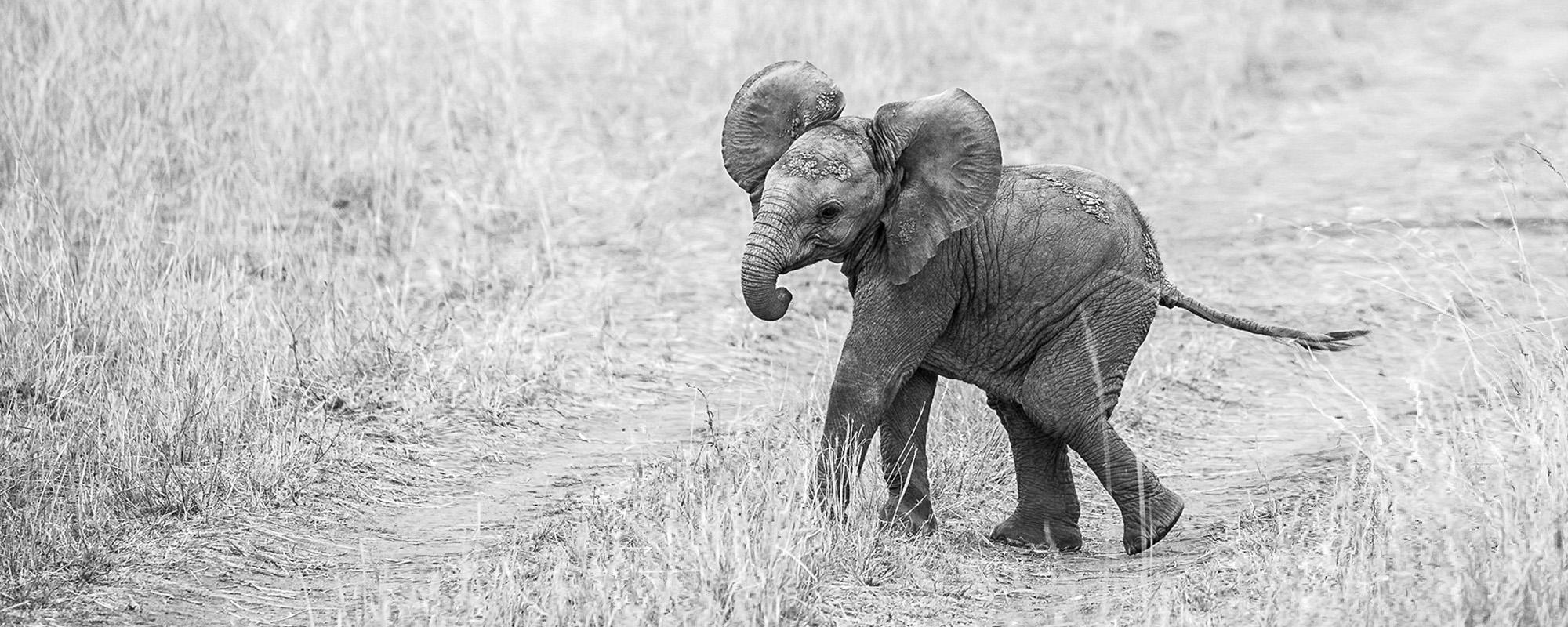 Pangolin Photo Safaris 10