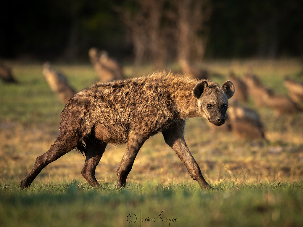 Pangolin Photo Safaris – Janine Krayer 02