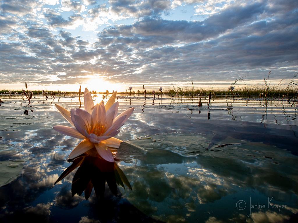 Pangolin Photo Safaris – Janine Krayer 04