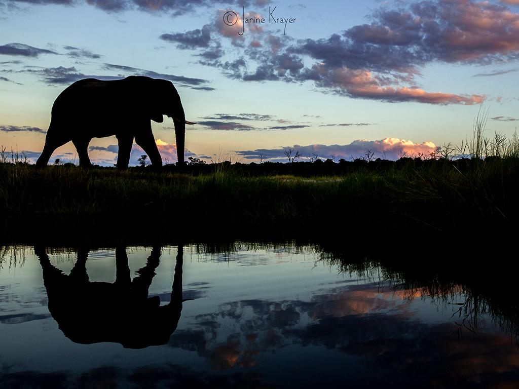 Pangolin Photo Safaris – Janine Krayer 10
