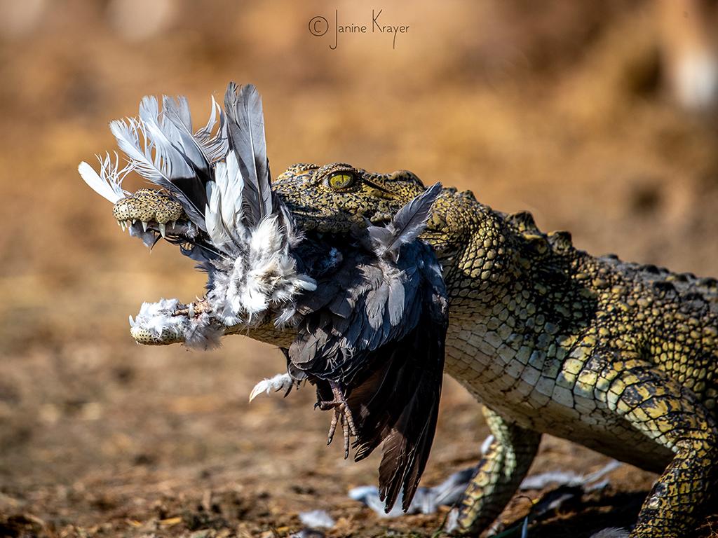 Pangolin Photo Safaris – Janine Krayer 15