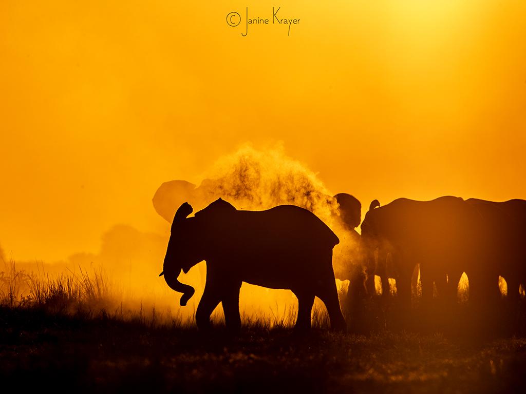 Pangolin Photo Safaris – Janine Krayer 16