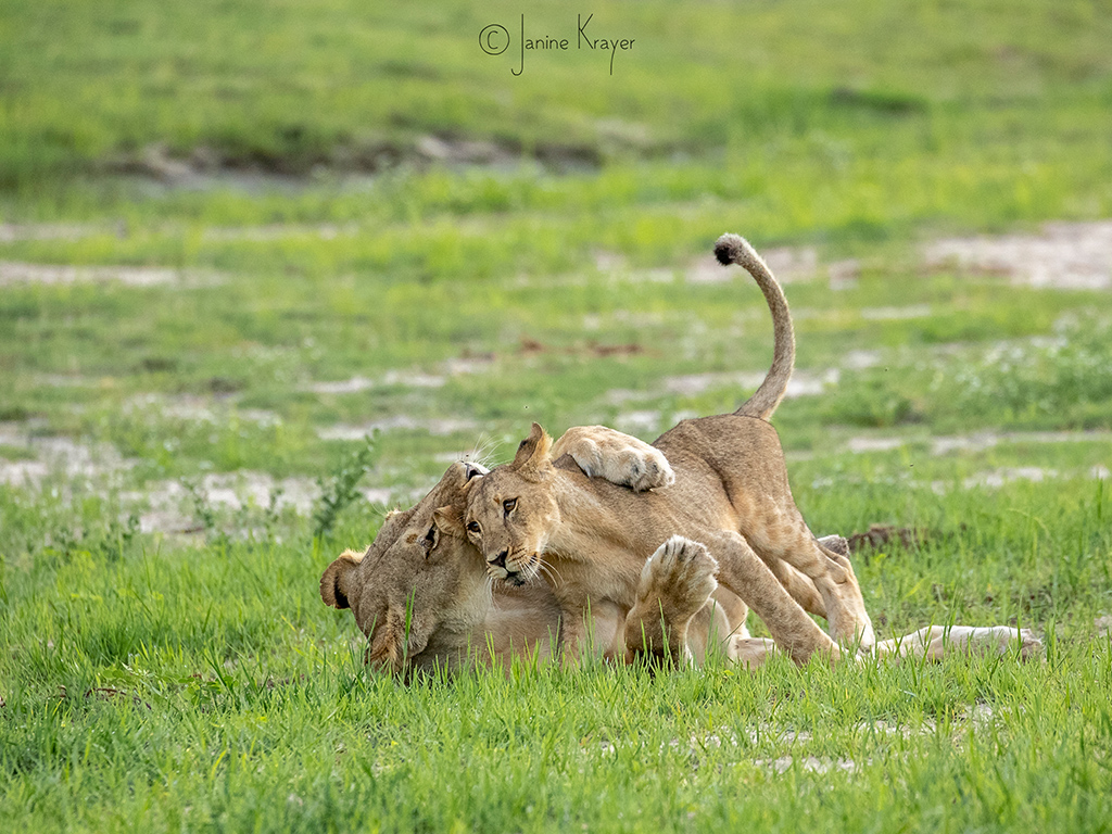 Pangolin Photo Safaris – Janine Krayer 17