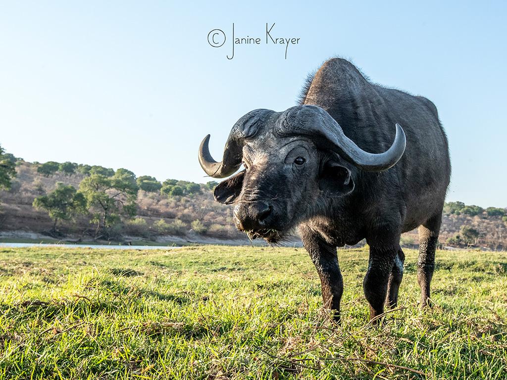 Pangolin Photo Safaris – Janine Krayer 20