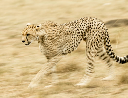 The Five shutter speeds you need for Wildlife Photography