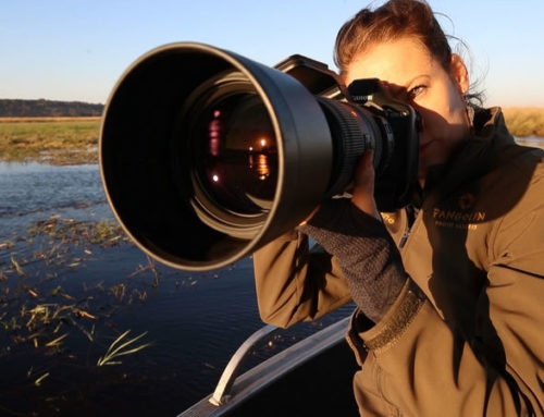 Sigma 60-600 mm Lens Review
