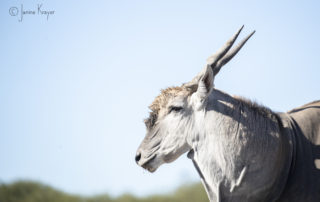 Janine Krayer Wildlife Photography-1-14