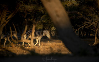 Janine Krayer Wildlife Photography-1-15