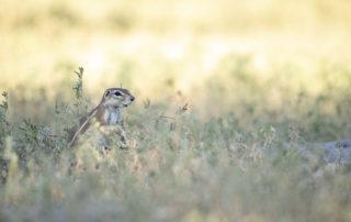 Janine Krayer Wildlife Photography-1-18 (2)