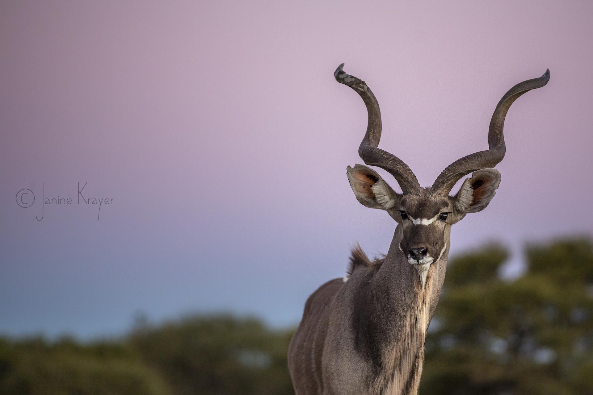 Janine Krayer Wildlife Photography-1-19
