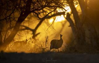 Janine Krayer Wildlife Photography-1-23