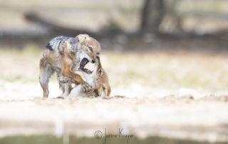 Janine Krayer Wildlife Photography-1-30