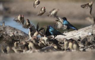 Janine Krayer Wildlife Photography-1-43 (1)