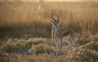 Janine Krayer Wildlife Photography-1-46 (1)