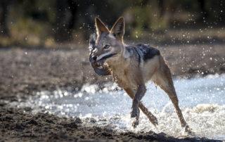 Janine Krayer Wildlife Photography-1-7