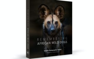 Remebering wild dogs