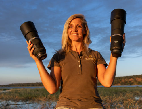 Canon f/11 RF lens review for wildlife photography